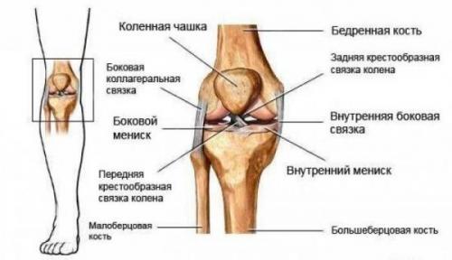 Болит колено при ходьбе с внутренней стороны