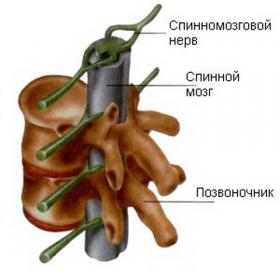 Ретролистез с5 шейного отдела